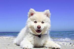 adorable fluffy dog on a beach