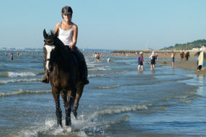 horse and rider on a beach
